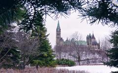 evergreen parliament - stock photo