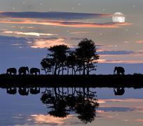 Kaunis afrikkalainen teemalla siluetti on upea auringonlasku taivas Kuvituskuvat