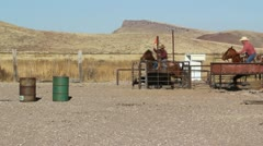 Two cowboys lassoing calf on horseback in the afternoon Stock Footage