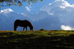 Horse - thunderclouds - stock photo
