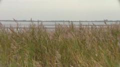 Dunes waving grass Stock Footage