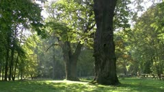 Ivenack Oaks in Mecklenburg - Northern Germany Stock Footage