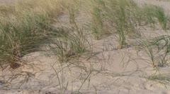 Waving dune grass Stock Footage