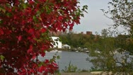 The Red Leaves of a Tree in Autumn Stock Footage
