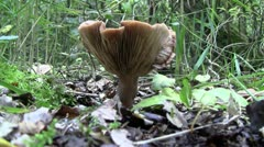 Mushroom in the forest Stock Footage