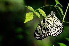 Black and White Butterfly on a Green Leaf Against a Defocused Green Background 3 Stock Photos
