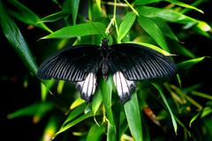 Black Butterfly on Leaf against a Defocused Natural Background  - stock photo