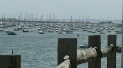 Countless Boats in Harbor Stock Footage