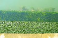 Close-up stairs covered with algae Stock Photos