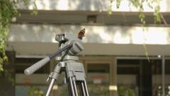 Buterfly on the tripod 2 - stock footage