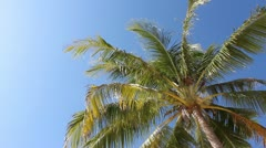 Palm tree - stock footage