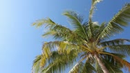 Stock Video Footage of Palm tree