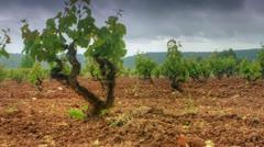 Vineyards timelapse Stock Footage