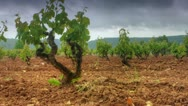Stock Video Footage of  vineyards time-lapse