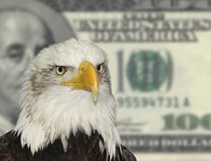 American symbol bald eagle against dollar currency background Stock Photos
