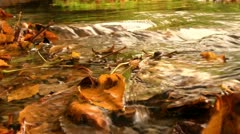 Autumn leaves in a stream Stock Footage
