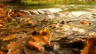 Stock Video Footage of Autumn leaves in a stream