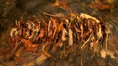 A backup of Autumn leaves in a stream - stock footage