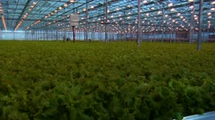 Greenhouse 2 - stock footage