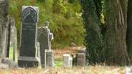 Stock Video Footage of Tombstones in a Graveyard