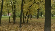 Park Stock Footage