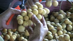 Asian Woman Culling Lamyai Fruit-Close Up Stock Footage