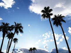 palm trees with blue sky and clouds - stock photo