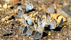 Butterflies Stock Footage