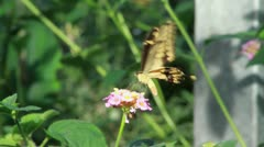 Brown Butterfly on Pink Flower - Takeoff HD Stock Footage