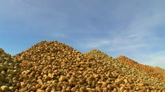 Sugar beet harvest and storage 10 Stock Footage