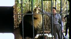 LION TAMER Tiger Wild Animal Endangered Vintage Film Retro Home Movie 5426 Stock Footage
