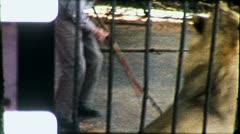 LION Lioness TAMER Tiger Wild Animal Endangered (Vintage Film Home Movie) 5431 Stock Footage