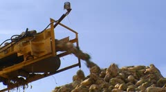 Sugar beet harvest and storage 2 Stock Footage