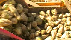 Sugar beet harvest and storage 24 Stock Footage