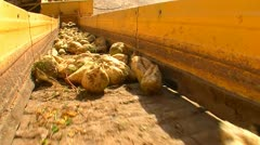 Sugar beet harvest and storage 25 Stock Footage