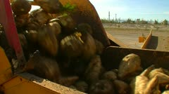 Sugar beet harvest and storage 27 Stock Footage