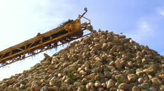 Sugar beet harvest and storage 3 - stock footage
