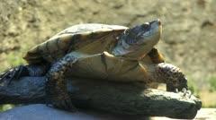 1080p Turtle Stock Footage