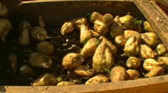 Sugar beet harvest and storage 30 Stock Footage
