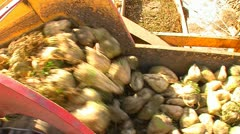 Sugar beet harvest and storage 31 Stock Footage