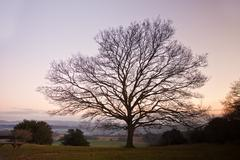 Single bare winter tree against vibrant sunset Stock Photos