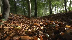Forest walk autumn Stock Footage