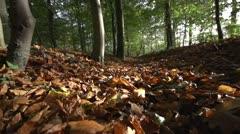 Forest walk autumn - stock footage