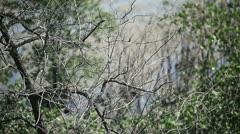 Between trees. Stock Footage