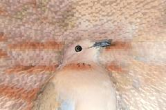 dove on an abstract background of extrusion - stock illustration