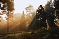 Stock Photo of inspirational dawn sun burst through trees in forest autumn fall