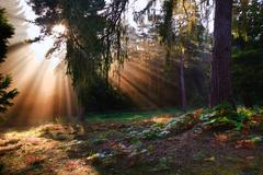 inspirational dawn sun burst through trees in forest autumn fall - stock photo