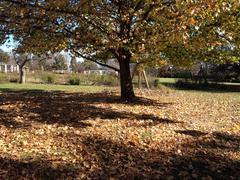Leafy Tree in Park - stock photo