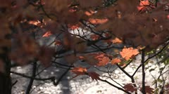 Koyo, autumn leaves in Japan Stock Footage
