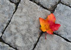 Autumn leaf against stone texture Stock Photos